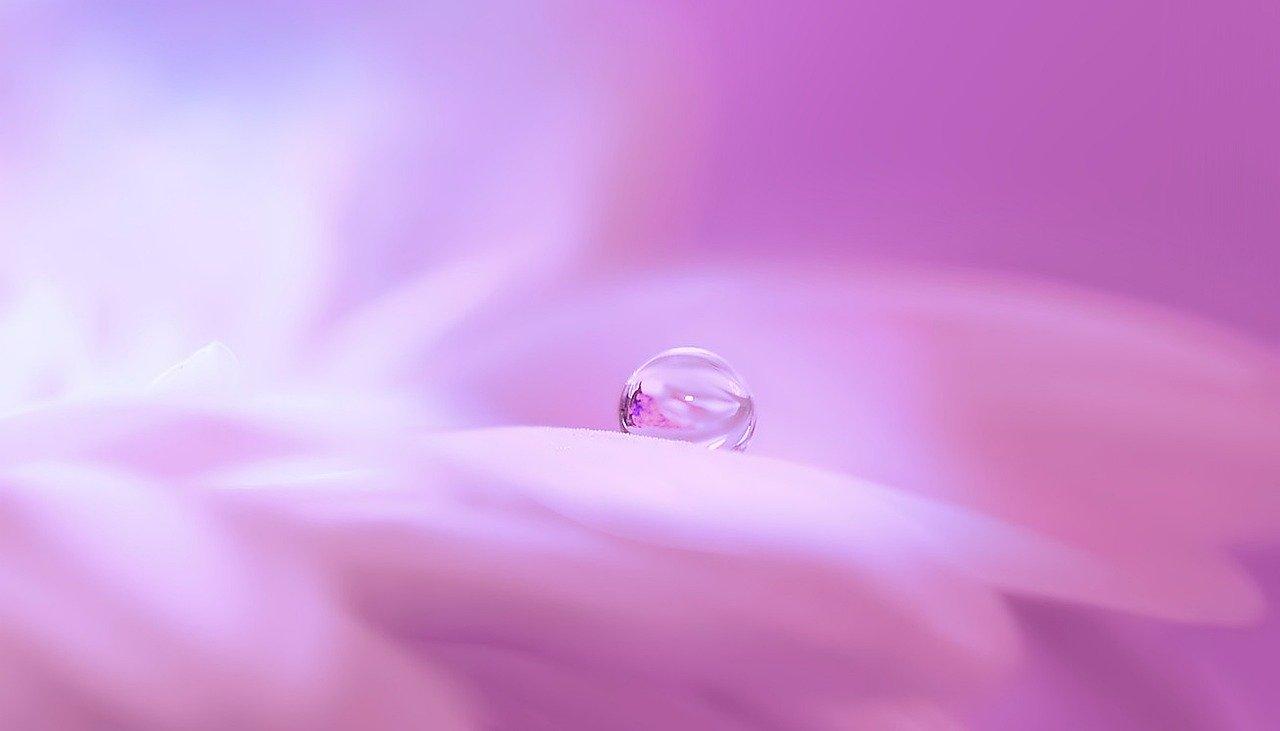 ピンクと水滴