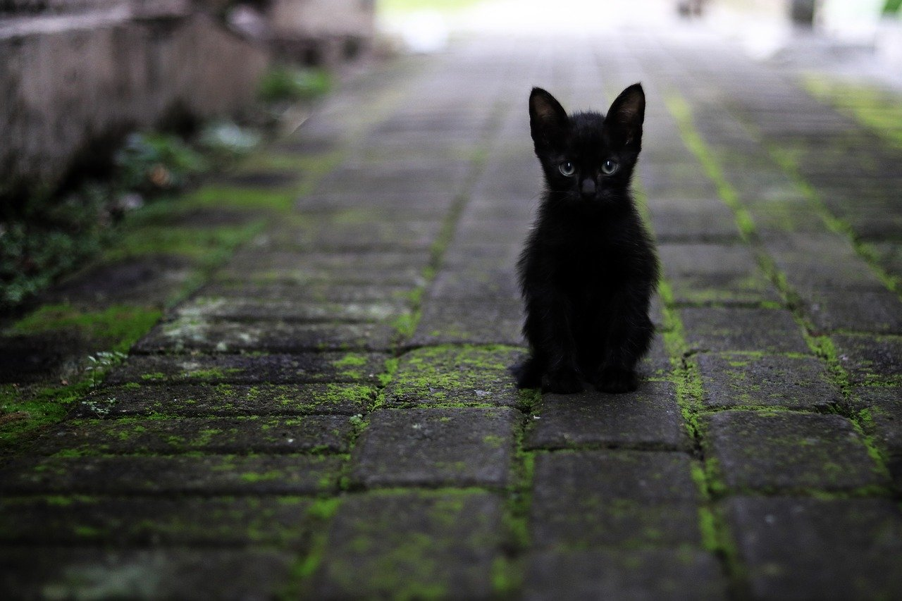 路地の黒猫